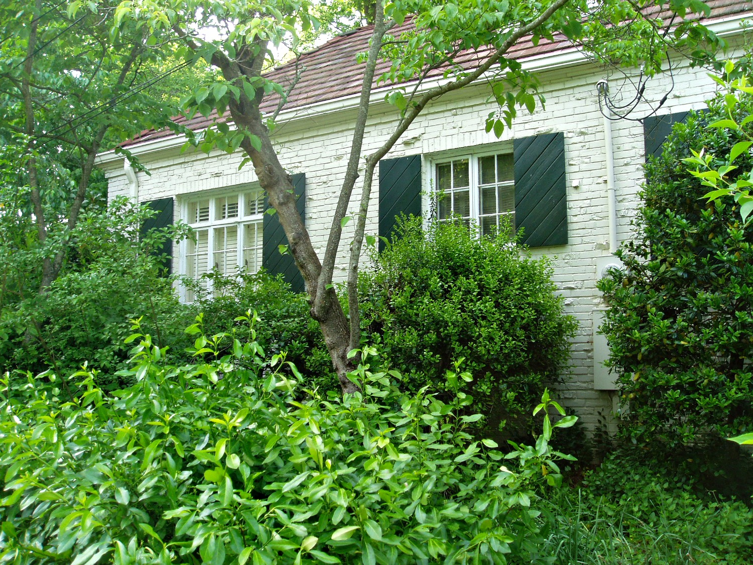 Home Maintenance Tip Prune Shrubs And Trees To Protect Your House Atlantic Foundation Amp Repair