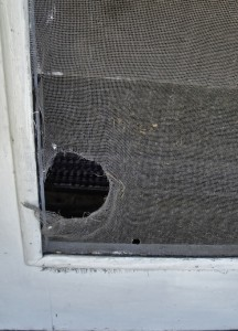 Home Maintenance Tip: Repair Your Torn Window Screens