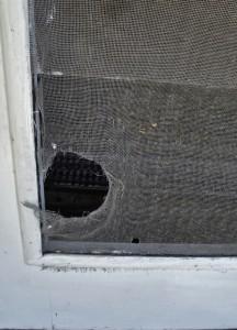 Home Maintenance Tip: Repair Your Torn Window Screens