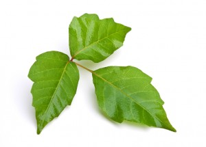Home Maintenance Tip: How to Kill Poison Ivy
