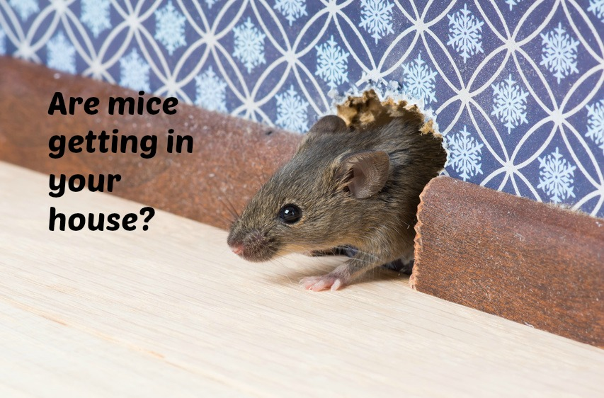 Home Maintenance Tip: Get Rid of Mice in Your Crawl Space