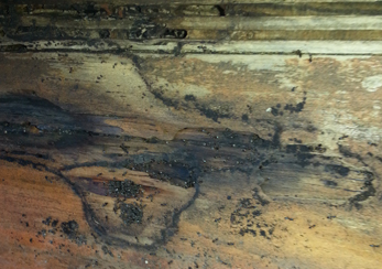 mold and mildew in a flooded crawl space